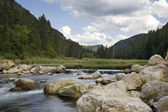 Trout stream in the Black Hills of South Dakota — Stockfoto