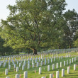 Gravestones below beautiful tree in Arlington National Cemetery — Stock Photo