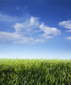 Low angle view of grass and sky with clouds — Stock Photo