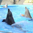 Dolphins playing in dolphinarium. — Stock Photo