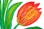 Flowers drawn by water color paints — Stock Photo