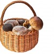 Basket with mushrooms — Stock Photo