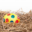 Nest with easter egg - Stock Photo