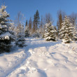 Winter in the mountains of Carpathians — Stock Photo
