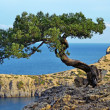 Marine landscape with a tree on a rock — Stock Photo