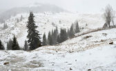 Snowstorm in the mountains. — Stock Photo