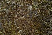 Nori-algen-blatt — Stockfoto