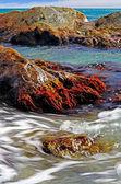 Rocks with algae — Stock Photo