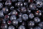 Blueberries fruit close up — Stock Photo