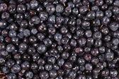 Blueberries fruit background — Stock Photo