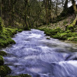 River flowing through mossy woodland — Stock Photo