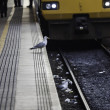 Stock Photo: Gulls foraging off railway tracks