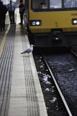 Gulls foraging off railway tracks — Stock Photo
