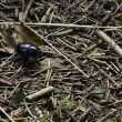 Stock Photo: Black beetle on forest floor
