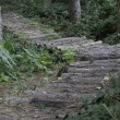 Rustic log path through forest — Stock Photo