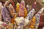 Colorful dried Indian Corn — Stock Photo