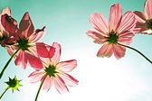 Pink flowers (vintage style) — Stock Photo