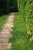 Path in Japanese garden — Stock Photo