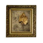 Dry yellow leave on old frame — Stok fotoğraf
