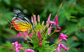 Monarch Butterfly on a Flower. — Stock Photo