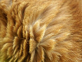 Cat fur — Stock Photo