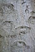 Streszczenie buk kory z kształtu oka — Zdjęcie stockowe