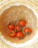 Harvested tomatoes in farmer's hat — Stock Photo