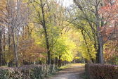 Autumn avenue — Stock Photo
