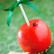 Chocolate Caramel Apples — Stock Photo #31868127