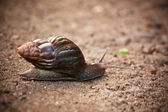 Moving at a snail's pace — Stock Photo