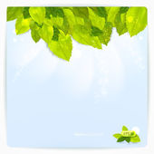 Vector background with stylish composition of green leaves. — Stock Vector