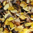 Autumn or fall leaves — Stock Photo