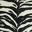 Black and white zebra stripes — Stock Photo