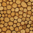 Cross-sectional view of timber logs - Stock Photo