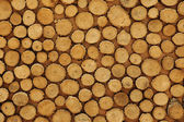 Cross-sectional view of timber logs — Stock Photo
