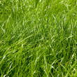 Fresh green spring grass - Stock Photo