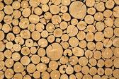 Texture of cut timber logs — Stock Photo