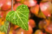 Gotas de agua sobre la hoja verde — Foto de Stock