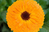 Vivid yellow flower Vivid yellow flower — Stock Photo
