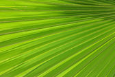 Radiating palm frond pattern Radiating palm frond pattern — Stock Photo