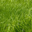 Background of fresh green grass — Stock Photo