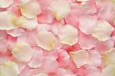 Soft pink and white rose petals — Stock Photo