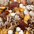Stock Photo: Assorted collection of fresh mushrooms