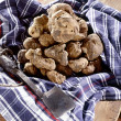 Stock Photo: White truffles on napkin