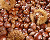 A background of sweet chestnuts — Stock Photo