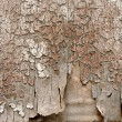 Stock Photo: Background of old peeling wood
