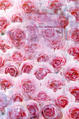 Close up of an array of pink roses — Stock Photo