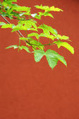 Follaje verde — Foto de Stock