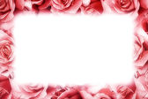 Pink rose frame — Stock Photo