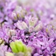 Stock Photo: Ethereal background of lilac-coloured flowers